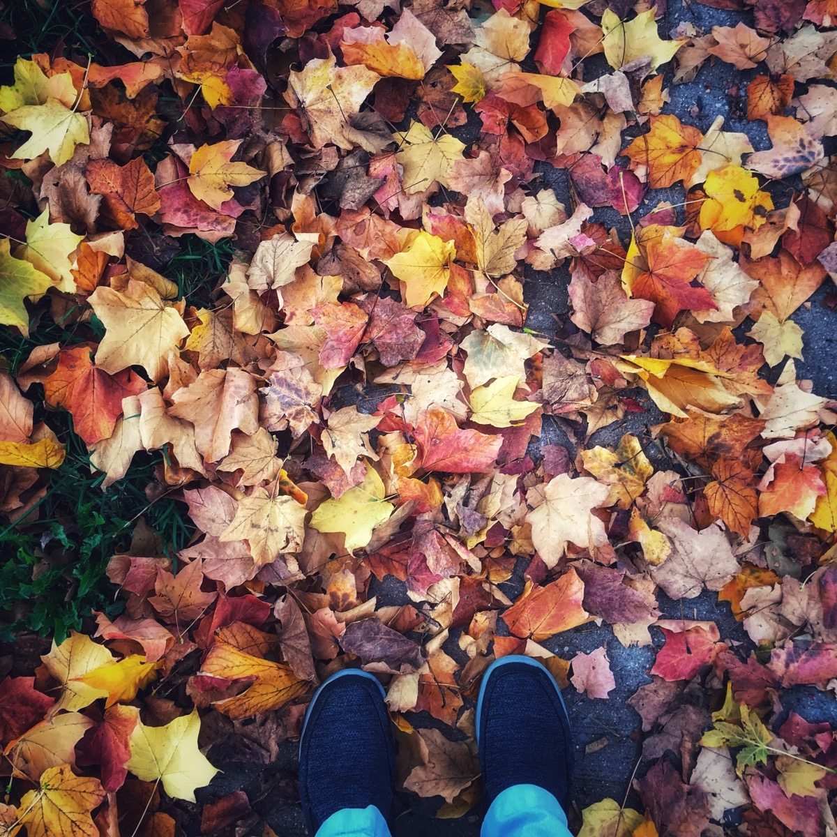 Pile of leaves at feet