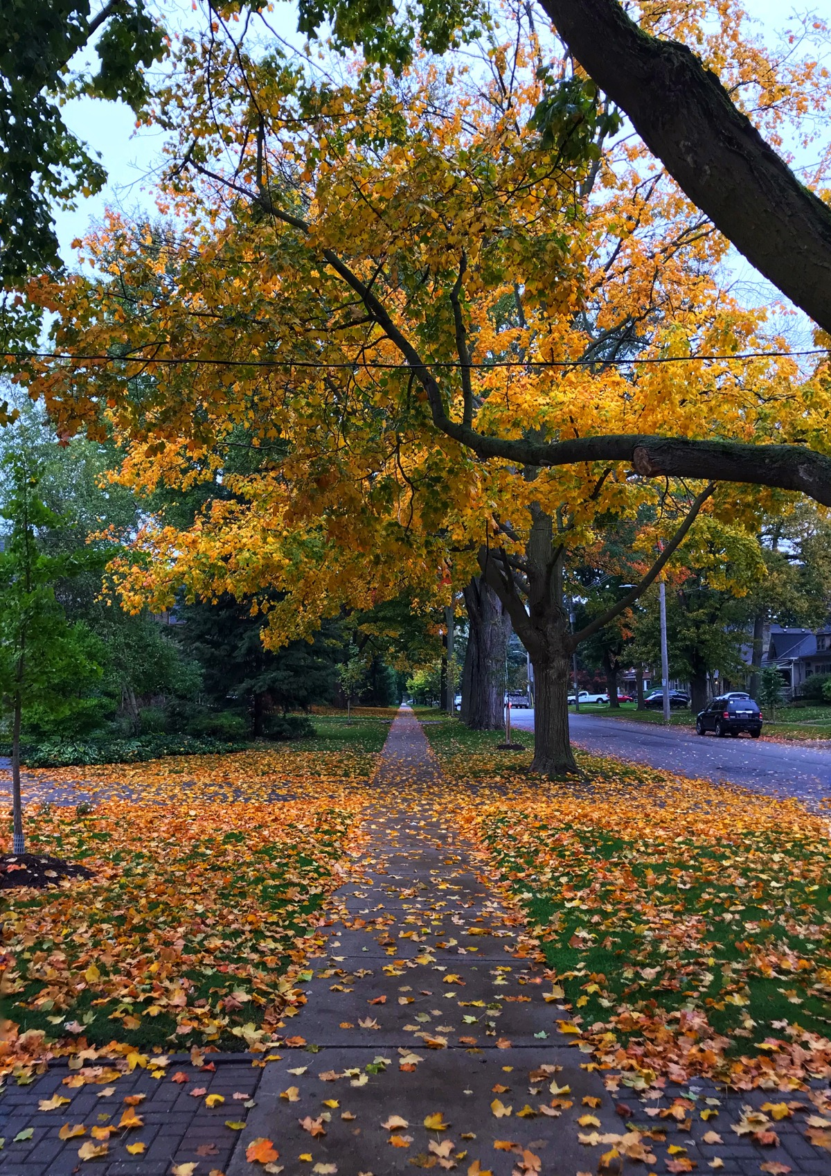 City sidewalk covered in yellow leaves