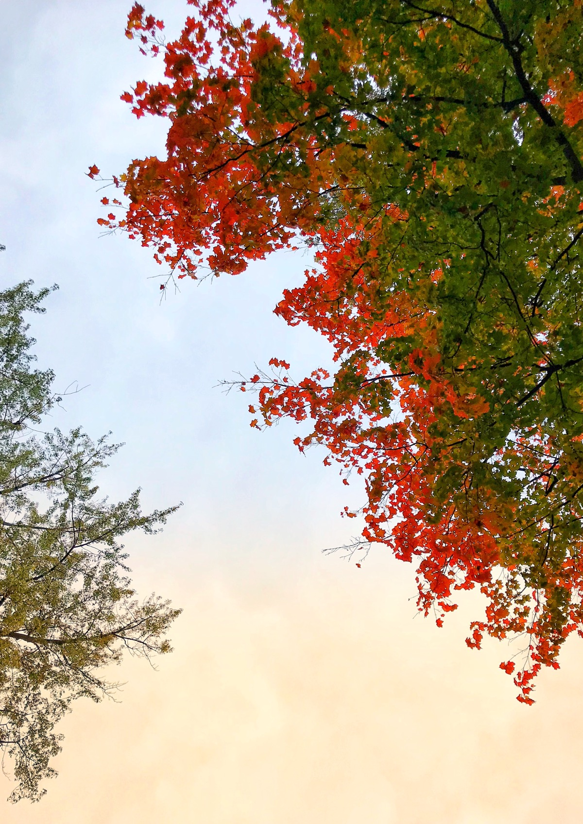 Red leaves on tree against the sky