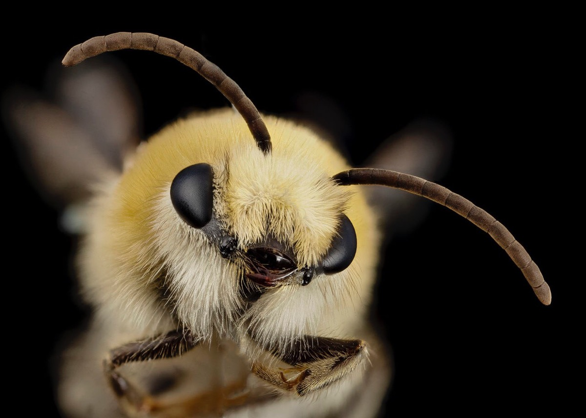 Close-up photo of a bee