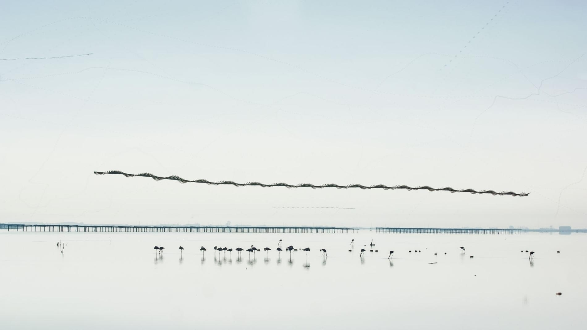 Xavi Bou captures the paths that birds make across the sky