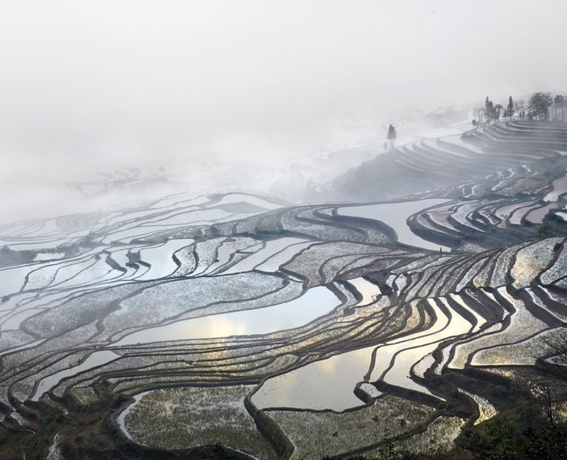 Rice terraces in Yunnan, China
